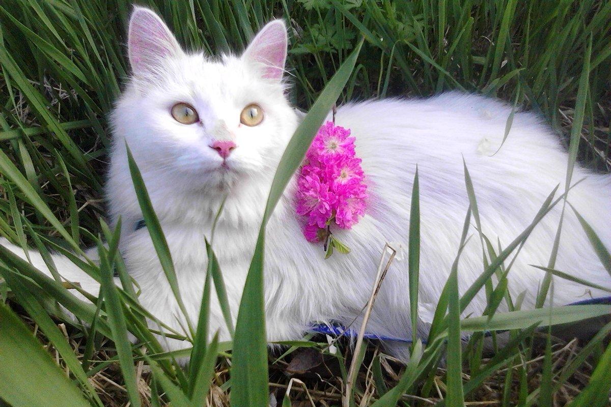 Апрельский кот фото