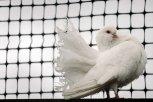 Амурский художник живет в доме-тереме, разводит голубей и «выращивает» цветы из пластиковых бутылок