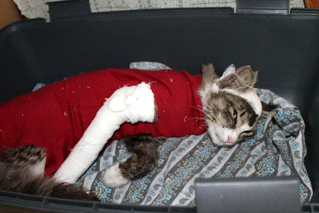 Подросток издевался над котом