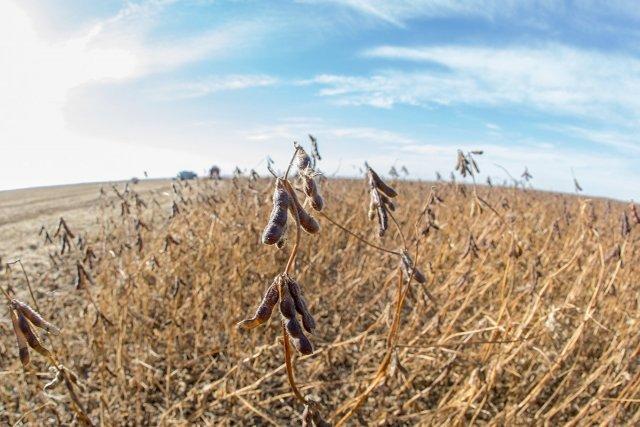 вагоностроительный урожайность сои в амурской области зерно, оптом розницу