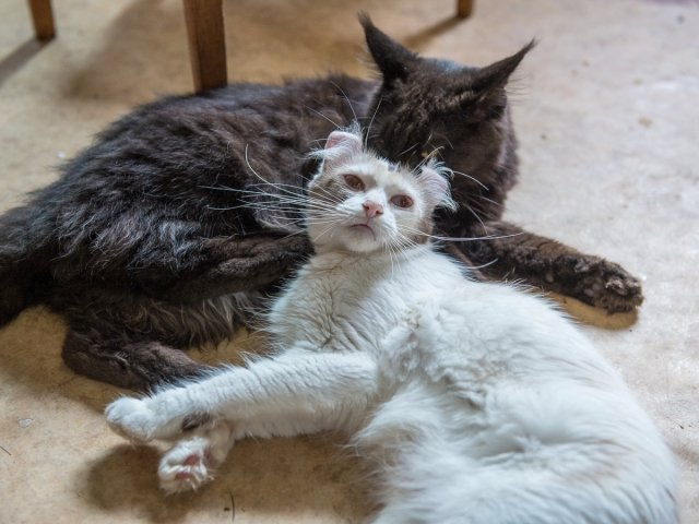 what is the best flea treatment for cats and home