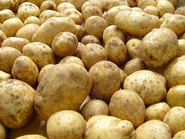 Амурские хозяйства собрали для Приморья 13 тонн овощей