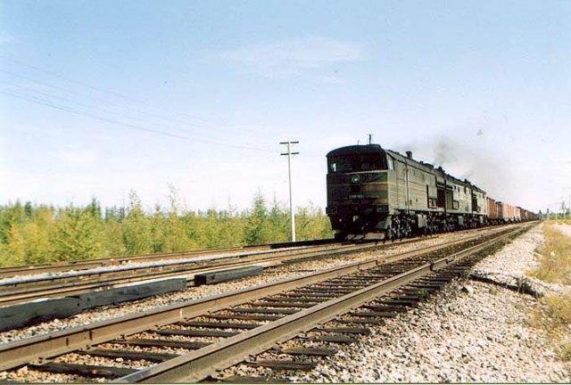 Поезд сбил медведя вАмурской области