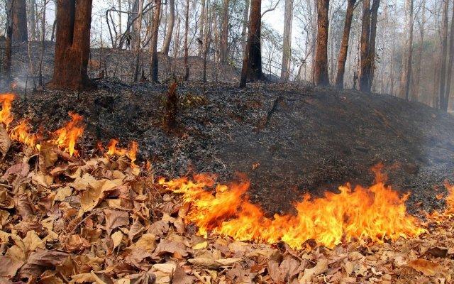 Амурская область иЯкутия получат дополнительные средства натушение пожаров
