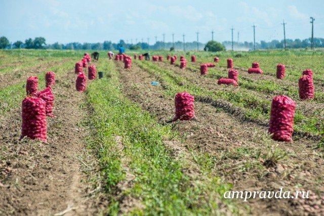 Государственная дума приняла поправки взакон одальневосточном гектаре