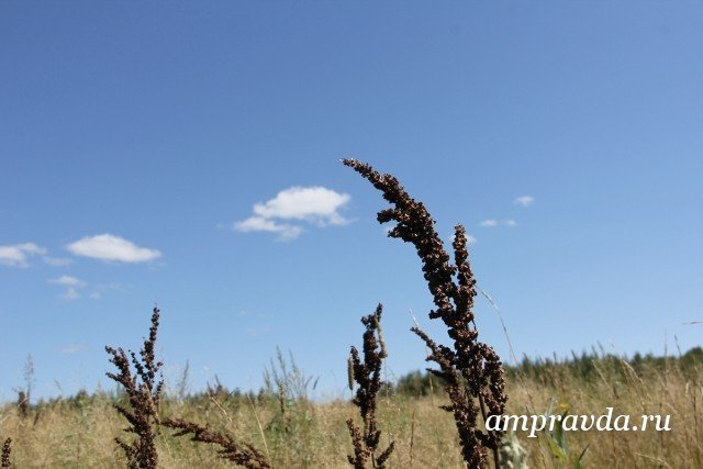 ВМосковской области предполагается теплый дождь идо24 градусов тепла