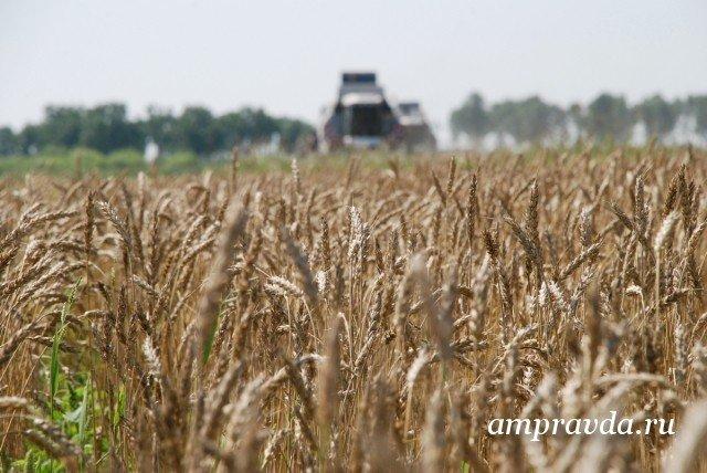 Власти Китая позволили экспортировать российскую пшеницу из 6-ти регионов