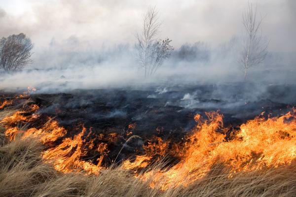 Природных пожаров вПриамурье становится больше