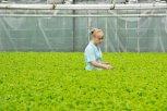 Секреты зелени: почему петрушку нельзя беременным и какая трава понижает давление