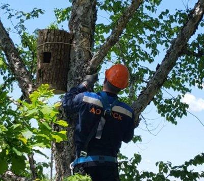Гнезда для уток-мандаринок установили амурские энергетики в Муравьевском парке
