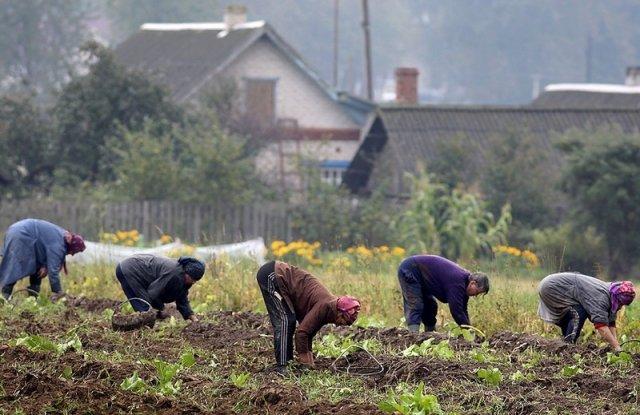 """一切都摆在我们面前了:在阿穆尔州,由于恶劣的天气和害虫,土豆收成不好/""""不是土豆-豌豆"""",阿穆尔居民在社交网络中抱怨。 """"收成很少,被熊吃掉了。""""连续数年以来,阿穆尔州的居民被迫比平时更早收获马铃薯,以免第二只面包免受水淹土壤的破坏。由于没有出现在桌子上的主要产品是什么,以及它将如何影响价格,因此找到了"""" Amurskaya Pravda""""的记者。"""