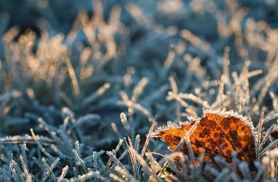霜冻比截止日期晚到了阿穆尔州地区/昨晚在阿穆尔州地区几乎所有地区都记录到零下温度。弗罗斯特来得比平常晚。十月份气温仍然高于正常水平,仍然令人满意。