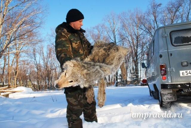 """野鸡的记录:今年在阿穆尔河地区的秋季狩猎将受到限制/由于冠状病毒大流行,阿穆尔河的猎人没有春季狩猎。现在所有的希望都在秋天。带着枪漫步在落叶中,欣赏秋天的大自然。 """" Amurskaya Pravda""""的记者了解了猎人的期望是否会实现。 """"当然,对我们而言,今年在所有方面都是艰难的,""""猎人和渔民阿穆尔学会主席谢尔盖·卡利奇丘克说。 -我们取消了春季狩猎活动...而且我们具有该地区的特殊性,如果禁止某些活动,那么它将不再存在。您不能将此狩猎转移到以后。"""""""