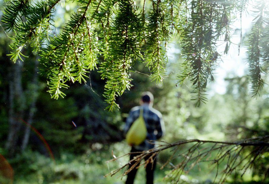 в лесу скачать торрент img-1