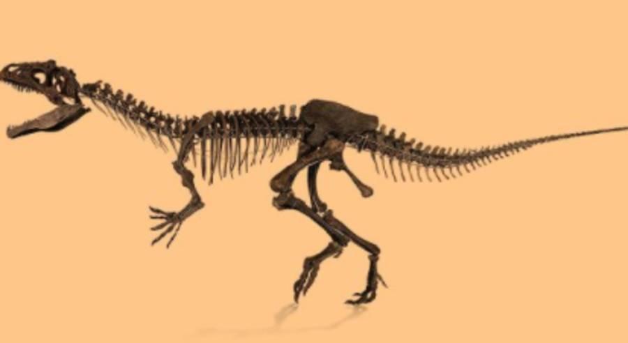 Диплодока иаллозавра продадут напарижском аукционе